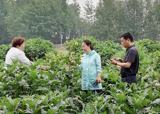 大邑县长连华到金牧粮草种养循环产业基地考察调研