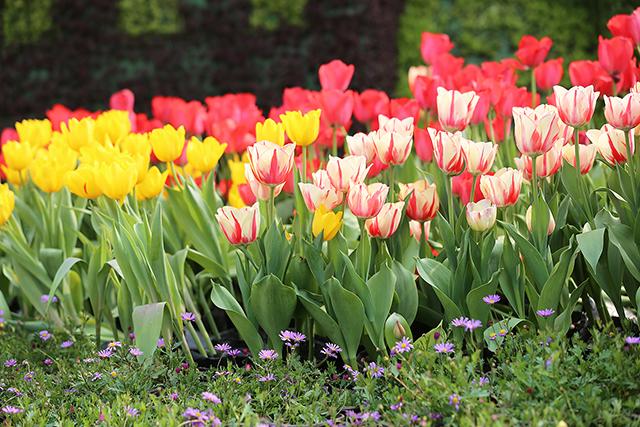 春节不打烊!成都市植物园陪您过新年